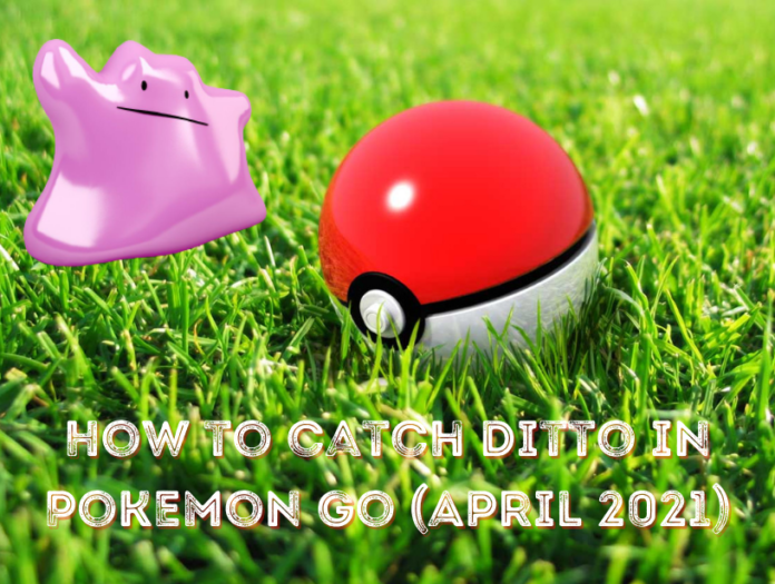 Ditto disguises in Pokémon Go